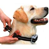 Как выбрать электронный ошейник для собаки